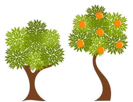 albero frutta: Due alberi con foglie verdi. Albero illustrazione Arancio Vettoriali