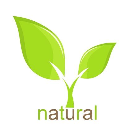 fide: Yeşil yaprak doğal simgesi. Vektör çizim Çizim