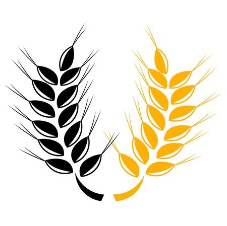 wheat grass: Two grain ears over white Illustration
