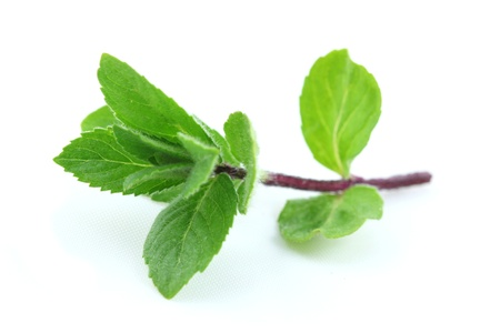 spearmint: Mint fresh branch isolated on white Stock Photo