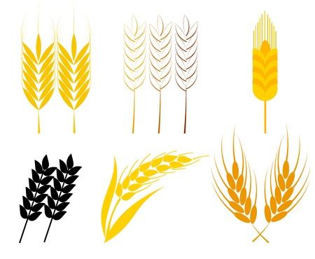 yellow  agriculture: Set de orejas de cereales - trigo y centeno s�mbolos. Ilustraci�n vectorial