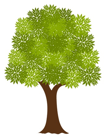 Noble oude boom. Vector illustratie Stockfoto - 15027421
