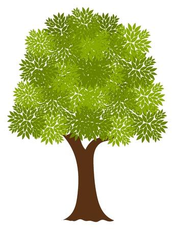 tronco: Viejo árbol Noble. Ilustración vectorial Vectores