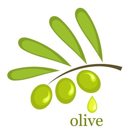 aceite de oliva virgen extra: Rama de olivo. Ilustraci�n vectorial
