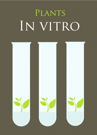 in vitro: Plants in test tubes. Laboratory micropropagation culture in vitro illustration