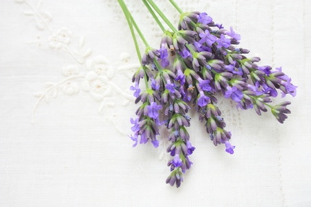flax: Lavender flowers on white ornamented flax