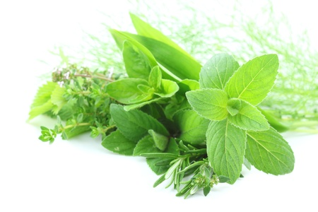Fresh green herbs on white background