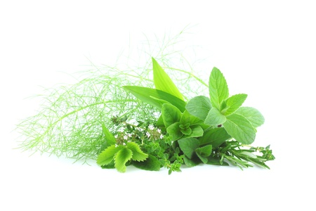 Fresh herbs on white background photo