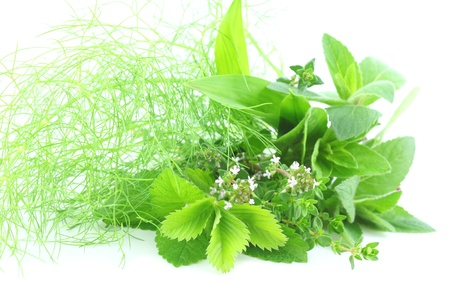 Fresh green herbs on white background photo