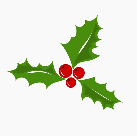 holly leaves: Christmas symbol holly berry