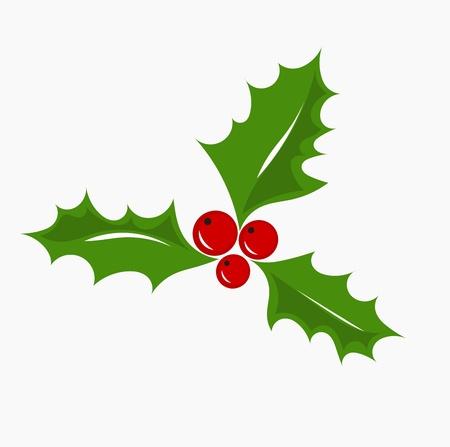 ilex aquifolium holly: Christmas symbol holly berry