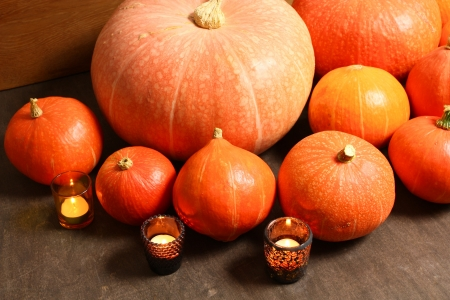 A lot of pumpkins in various sizes. Autumn harvest photo