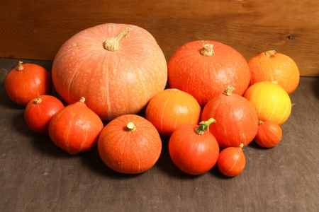 Pumpkins in various sizes - autumn harvest photo