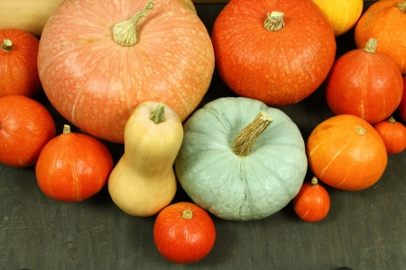 Various shapes and sizes of pumpkins. Autumn harvest photo
