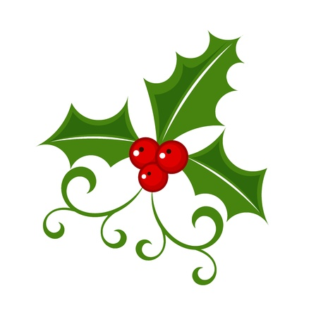 ilex aquifolium holly: Holly berry - Christmas symbol Illustration