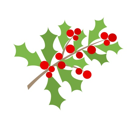 ilex aquifolium holly: Christmas branch of holly berry