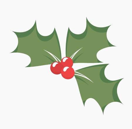 ilex aquifolium holly: Holly berry leaves and fruits - symbol of Christmas