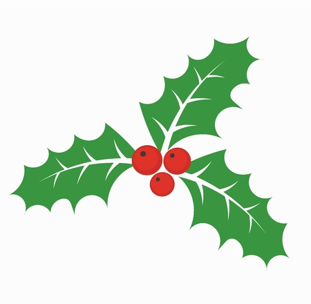 ilex aquifolium holly: Christmas holly berry Illustration