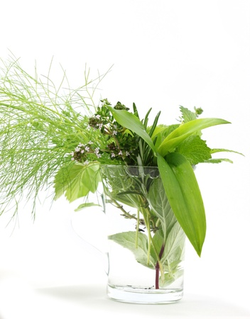 wild mint: Fresh herbs in glass Stock Photo
