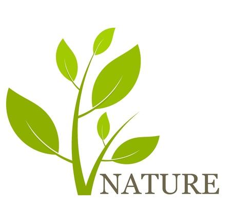 Nature concept groene plant. Vector illustratie