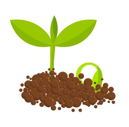 Germer les plantes de la terre. Vector illustration