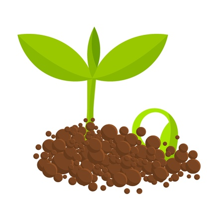 Germinating plants from ground. Vector illustration Vector