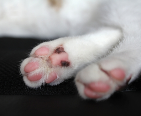 cat paw: Cat paws with pink pillows