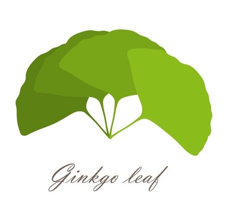 ginkgo leaf: Ginkgo biloba leaves bunch. illustration