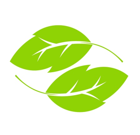 Two green leaves.  Vector