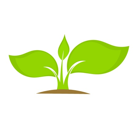 Young plant seedling growing in soil. Vector illustration Illustration