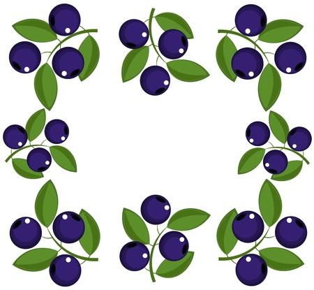 Blueberry frame. Vector illutration Vector