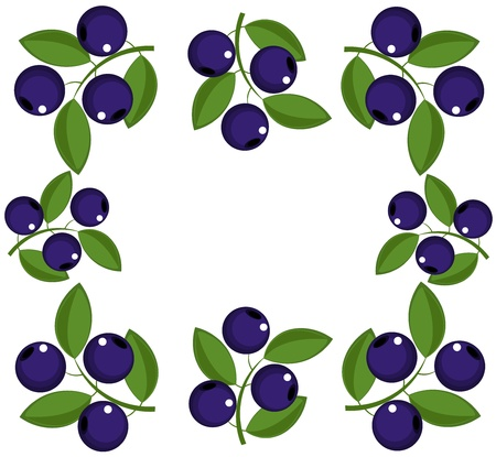 blueberry: Blueberry frame. Vector illutration Illustration