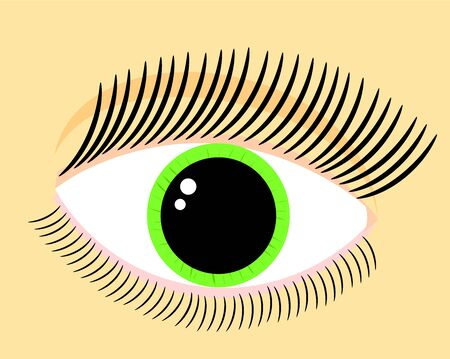 lash: One womans green eye vector illustration. Part of face
