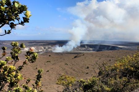 big island: Hawaii volcanoes National Park - crater on the caldera  Kilauea volcano and endemic Lehua tree