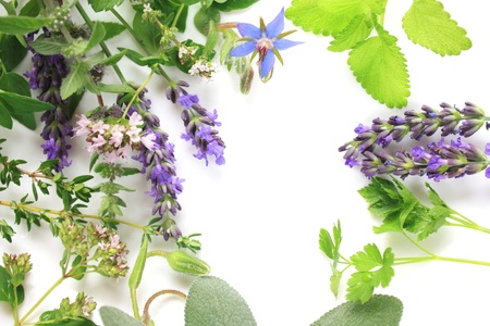 Fresh aromatic herbs border comosition photo