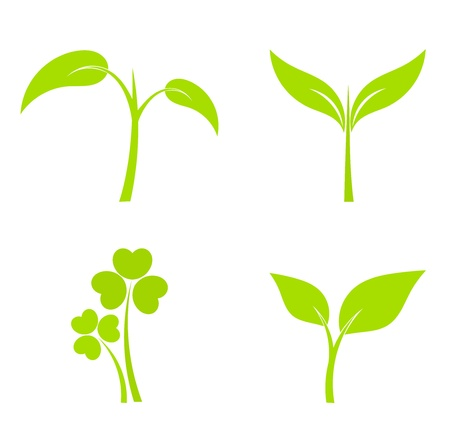 Set of four plant or leaf icons. Vector illustration Illustration