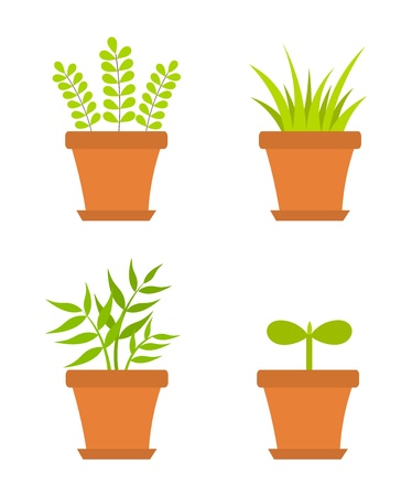 houseplant: Plants growing in pots. Vector illustration