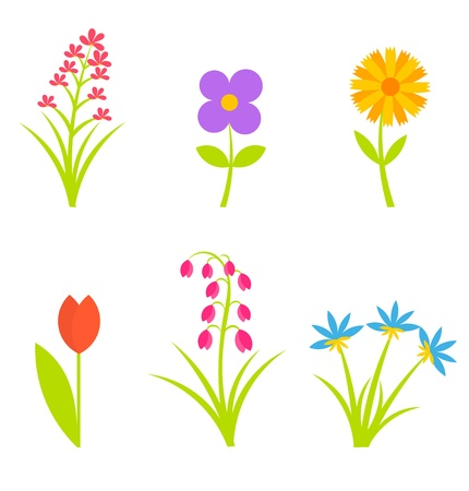 Collection of spring flowers. Vector illustration