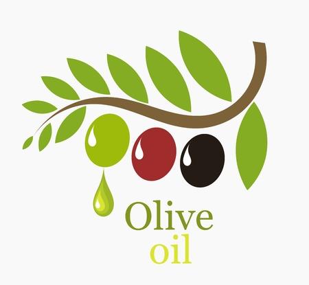 aceite de oliva virgen extra: Rama de olivo con las frutas - ilustraci�n simb�lica