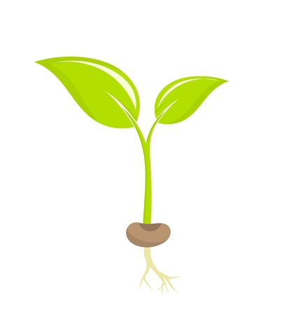 Little plant seedling illustration