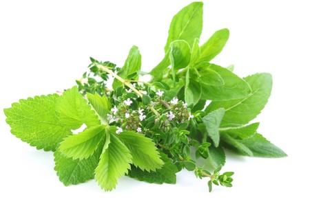 erbe aromatiche: Erbe fresche isolato su sfondo bianco