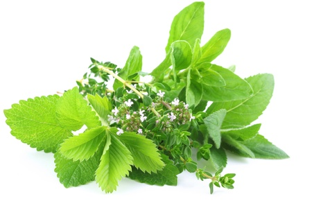 Fresh herbs isolated on white background photo