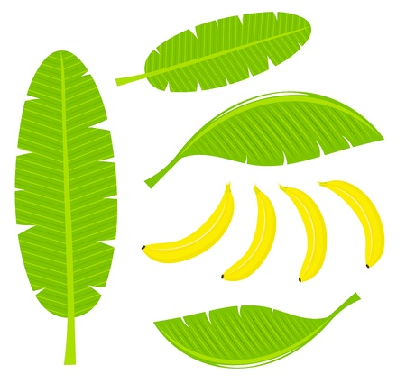 banana skin: Banana leaves and fruits illustration Illustration