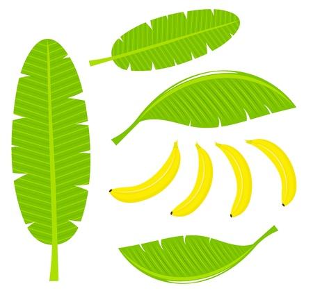banaan cartoon: Bananen bladeren en vruchten illustratie