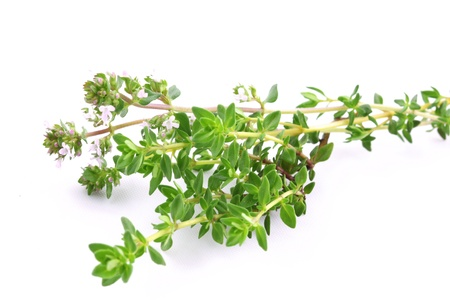 thyme: Fresh thyme branch Stock Photo