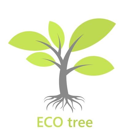 arbol raices: Árbol de Eco con las raíces. Ilustración vectorial Vectores