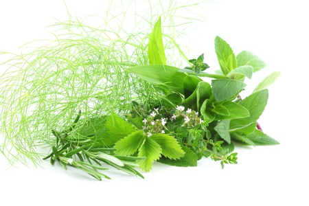Fresh green herbs isolated on white background photo