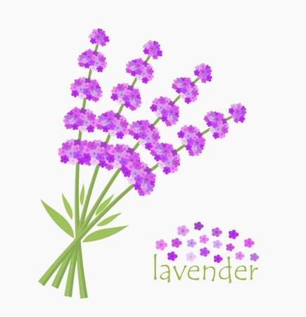 Lavender flowers bouquet, card concept. Vector illustration Vector