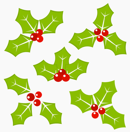 Holly berry leaves and fruits - symbol of Christmas. Vector illustration Vector