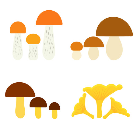 Collection of edible mushrooms. Vector illustration